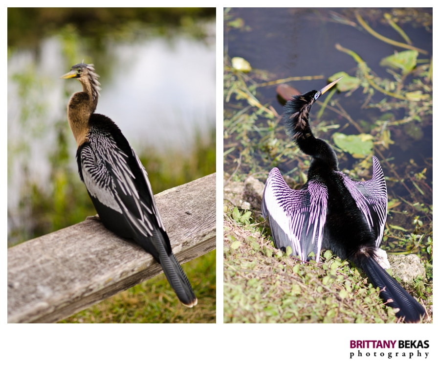 Florida Everglades | Brittany Bekas Photography // Destination Photographer