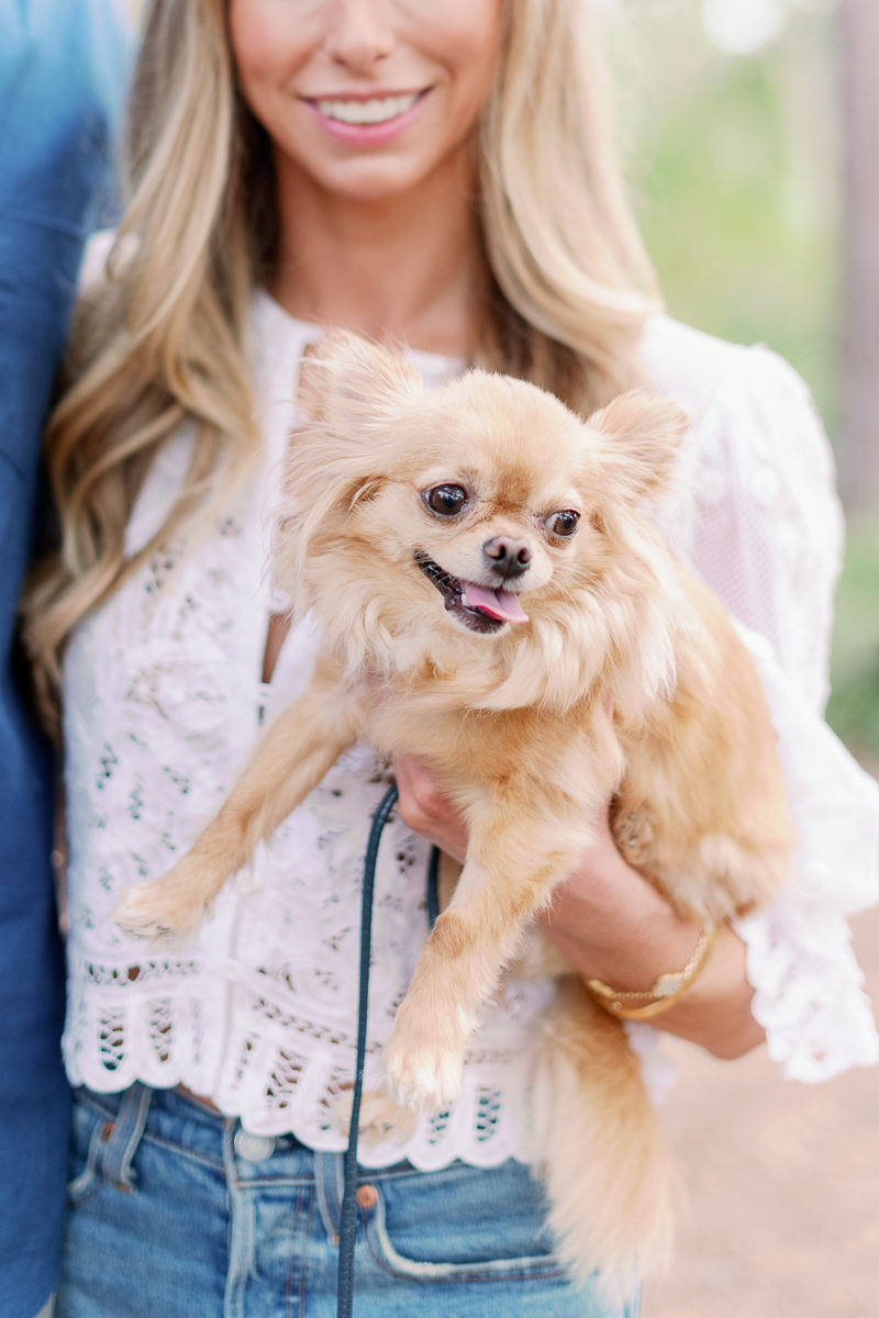 Where to take engagement / family photos with your dog in Chicago + Chicago Suburbs