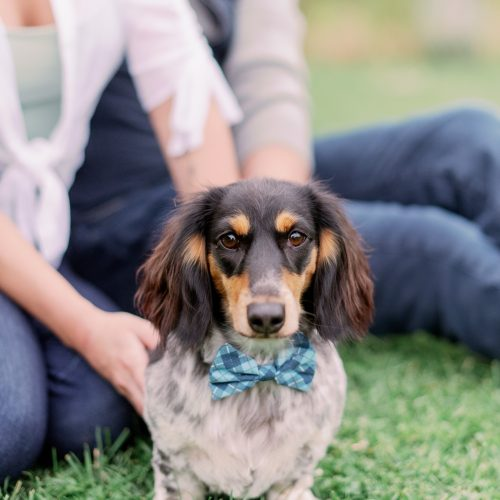 8 tips for including your dog in your family photos