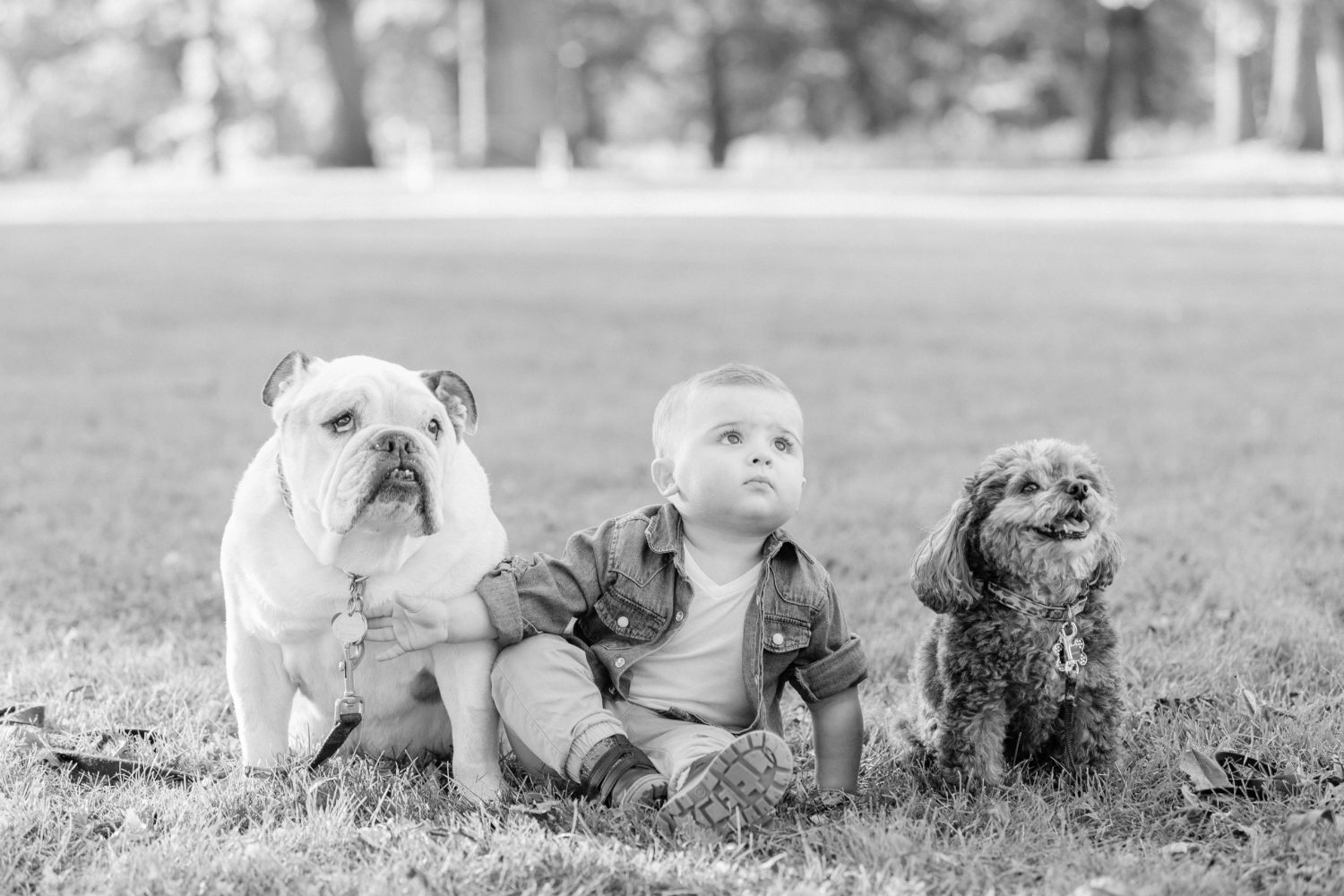 Include your dog in your family photos - 8 tips and advice for having dog in photos